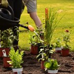 DEP Horticulture et jardinerie - Diplôme d'Études Professionnelles